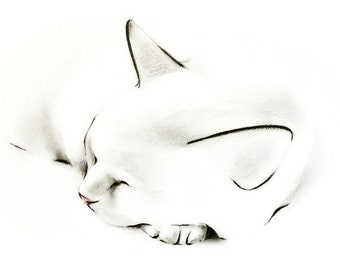 Greeting Card Fine Art Cat Card - Sleeping cat with head resting on paw