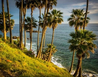 Palm trees and view of the Pacific Ocean, at Heisler Park, in Laguna Beach, California. | Photo Print, Stretched Canvas, or Metal Print.