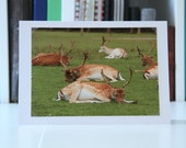 photographic cards,photo cards,photo greeting cards,thank you card,birthday card,wildlife,nature,reindeer,christmas card,xmas card,