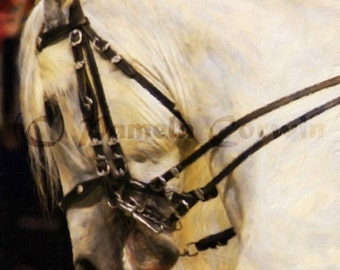 "White andalusion horse doing dressage art print: andalusion stallion print 16x20"" on canvas dressage horse painting print"