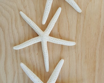 6 Medium Finger Star Fish-Starfish-Medium starfish-crafting-shell supply-sea shells-nautical-beach home decor-luau-mermaid-white star