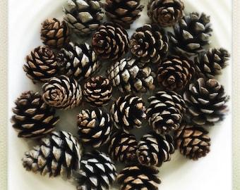 Assorted Mini Pinecones