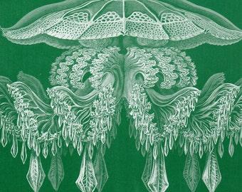 Original Ernst Haeckel Print Print 1899  Discomedusae Jellyfish Kunstformen Natur 1st Pl 88 Antique Print Lithograph