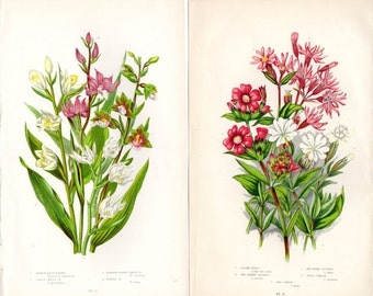 1899 Pair of 2 Antique Botanical Prints Anne Pratt Wildflowers Pink White Yellow Floral
