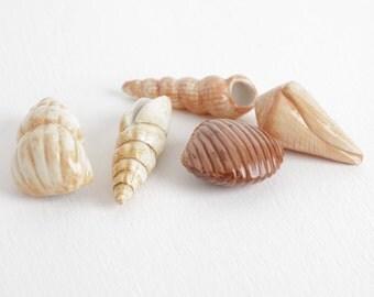 Vintage Ceramic Sea Shell Lot, 5 Glazed Seashell Collection