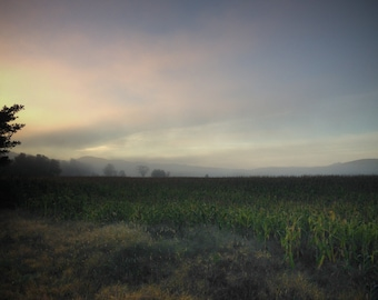 Morning on a Corn Field. Westford, Vermont