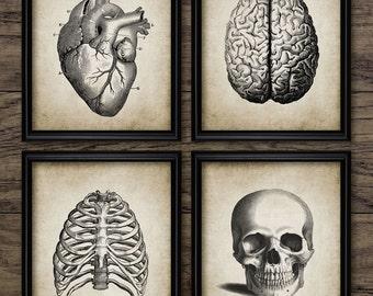 Human Anatomy Print Set Of 4 - Human Anatomy - Vintage Human Anatomy Illustration - Set Of Four Prints #375 - INSTANT DOWNLOAD