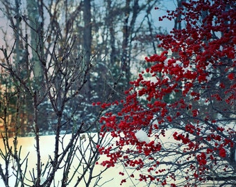 Botanical wall art Photography Nature Photography, Fine Art Photograph Red Berries winter Tree teal blue sky berry branches 8x10 photograph