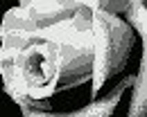 Monochromatic Close up of a Rose