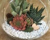 Valentine's Day Terrarium-XL Succulent Terrarium Kit-Succulent DIY Kit-Housewarming Gift-Glass Terrarium kit-Miniature Garden-Garden Gift