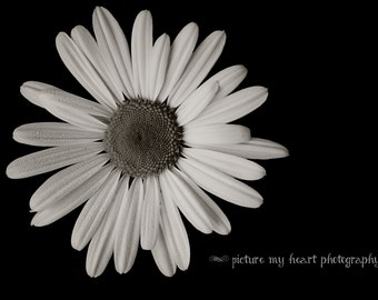 Stunny Black and White Daisy Print