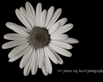 Black and White Daisy - Floral Art Print - Wall Decor- Photograph  - 5x7/8x10/11x14
