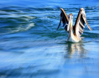 Pelican Photography Print Home Decor Wildlife Wall Art Pelican Landing On Water Print Nature Photography