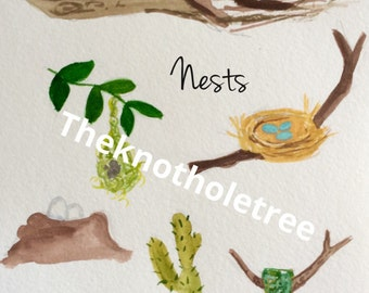 NESTS pdf original watercolor illustration