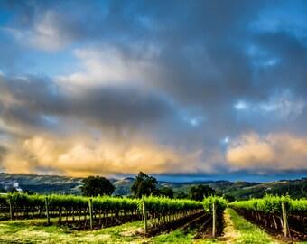 Napa Valley Vineyard Wall Art, Calistoga Sunrise