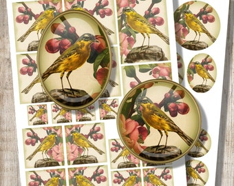 Yellow Wagtail, Digital Collage Sheet, Decoupage Set, Pdf Jpeg for Mirrors Earrings Pendants Magnets, Printable Download DigiBugs