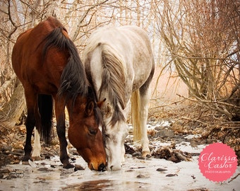 """Horses Drinking Water Photographic Print, """"Frozen Drink"""""""