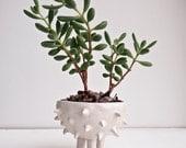 Handmade round ceramic spiky white cactus planter, planter,plant pot,planter pot, succulent planter, flower pot, ceramic, handmade ceramics