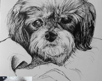 Pen & Ink Commission Pet Portraits