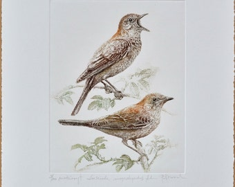 Common nightingale - handmade copper-plate engraving print