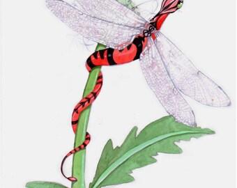 Dragon art watercolour painting, Dandelion Dragonfly