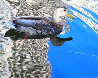 Bird Photography Nature Photography Landscape Photography Animal Photography Wall Art Nursery Art