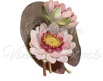 Botanical Print, Lotus Flower, Vintage Print, Printable Flower, Clipart, Digital Image for Print, Artwork - INSTANT DOWNLOAD - 1478
