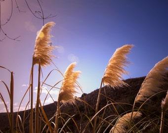 Outdoor Photography Santa Monica Mountain Feathers