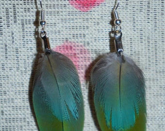 Md double Macaw feather earrings