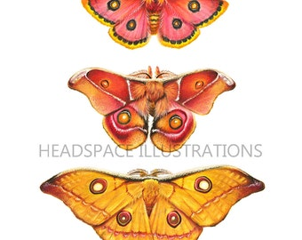 Triple Moth Archival Art - Colored Pencil Print by Headspace Illustrations