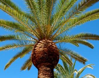 Florida Palm in the Sun