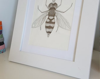 A5 Hand drawn Hoverfly, Scientific Illustration, Entomology
