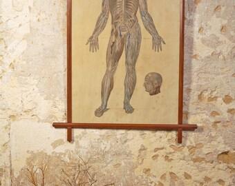 Lithograph human body