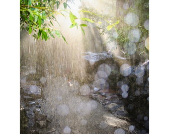 Road - Photograph, Tree, Rain, with sun breaking through the rain to show the way, Yosemite Park