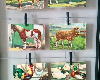 6 Vintage 40s Farm Animals Magazine Clippings For Decoupage, Farm Art, ACEO cards