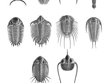 Trilobites and Sea Scorpions Collection Number 1  blank Cards Handmade 10 cards