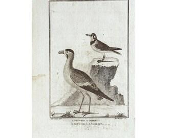 1775 ANTIQUE BIRD ENGRAVING - buffon bird rare original antique print ornithology engraving - wading birds plover