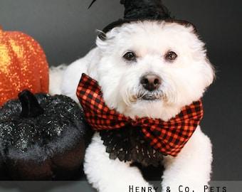 Witch Halloween Dog Costume- Hocus Pocus Dog Costume