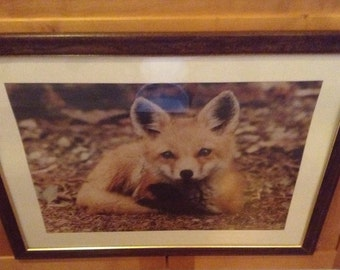 Little Red Fox Kit Laying in Meadow Spring Cute Young Baby Animal Print - Wildlife Photography