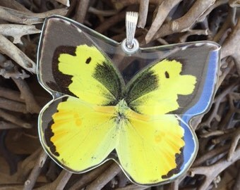 Real Whole Butterfly Pendant Necklace, Dogface Butterfly
