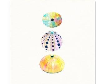 Sea Urchin Watercolor Print.