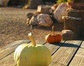 Rustic Picnic Fine Art Photography Pumpkins on an Old Wooden Table Autumn in the Desert Printable Digital Download Autumn Photography