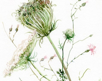 Queen Anne's Lace GICLEE print of original watercolor painting by A. Verbrugge, wild flowers painting