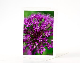 SALE CARDS, Pink Flower Cards, Nature Cards, Hydrangea, Celosia, Allium, Mayflower Flower Cards, Blank Photo Greeting Cards, Note Card, Sale