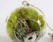 Geode + Pyrite Air Plant Terrarium Kit with Chartreuse Moss and Gray Sand || Neutral Decor || Small Hanging