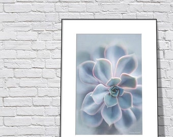 Light Blue Art for Bathroom, Teal Bathroom Decor, Succulent Art Print, Botanical Print, Bathroom Picture, Bath Decor, SouthWestern Photo