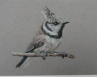 Signed Limited edition mounted giclee art print of pencil crayon drawing of a crested tit