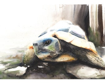 """Shop """"tortoise"""" in Art & Collectibles"""