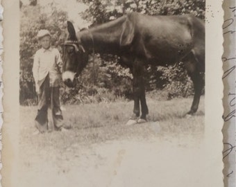 Vintage photo Boy and his Mule