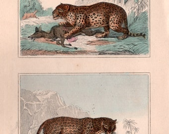 Leopard & Jaguar Buffon Engraving, Antique Print, Big Cats Illustration, 1835 Cuvier Natural History, Panthera pardus, Panthera onca, Feline